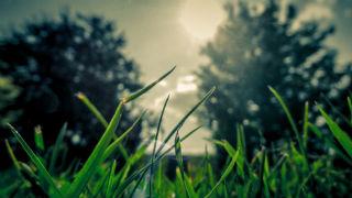 lawn-1.jpg